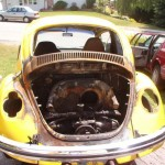 toasted Beetle picture