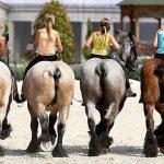 horse ass