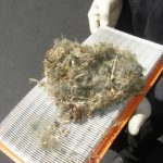 mouse_nest_air_filter