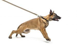 """leash 300x175 - Speed Limit """"Assist"""""""