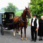 amish-buggy-horse