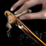 camel_needle1